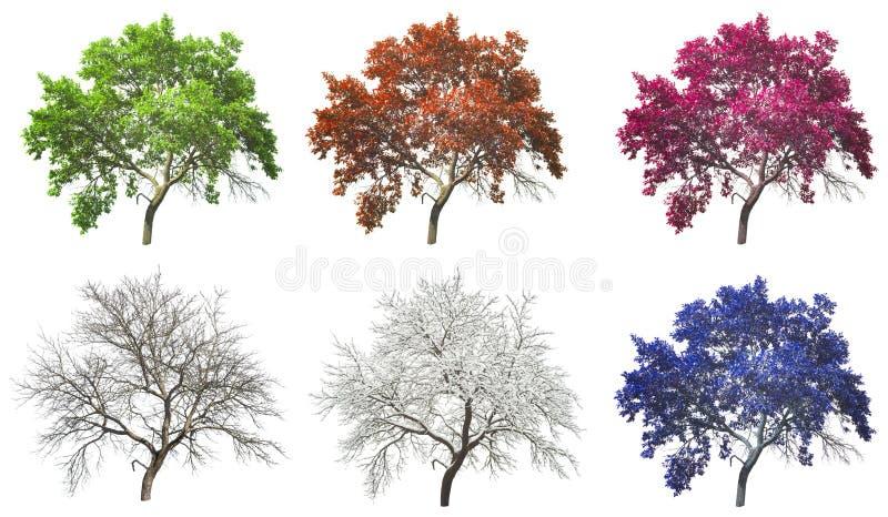 Ensemble d'arbre de quatre saisons d'isolement images libres de droits
