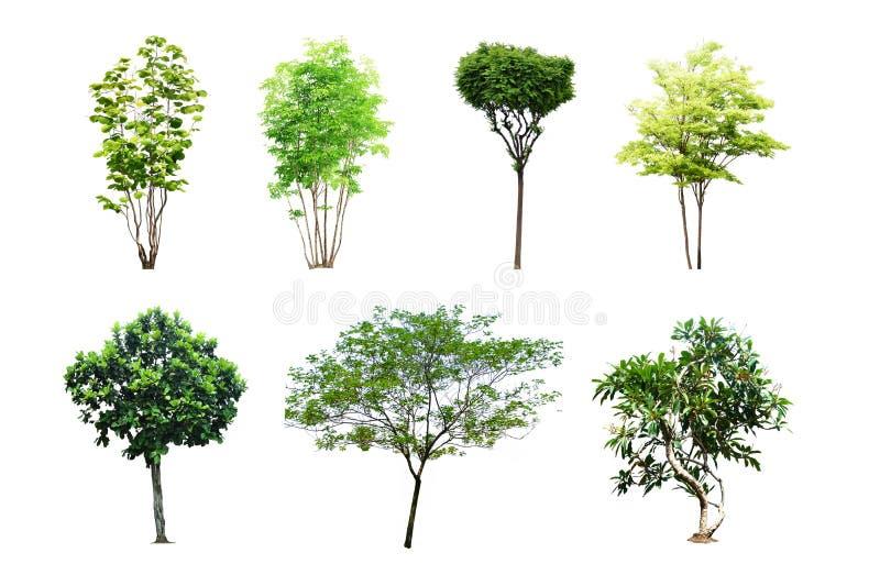 Ensemble d'arbre d'isolement sur le fond blanc photos libres de droits