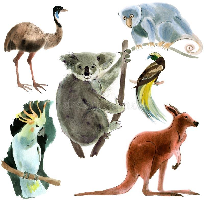 Ensemble d'Australie d'animaux Illustration d'aquarelle à l'arrière-plan blanc illustration libre de droits