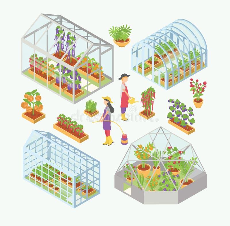 Ensemble 3d de la serre chaude en verre, germoir avec des jeunes plantes Les plantes aquatiques de personnes, les fleurs, légumes illustration stock