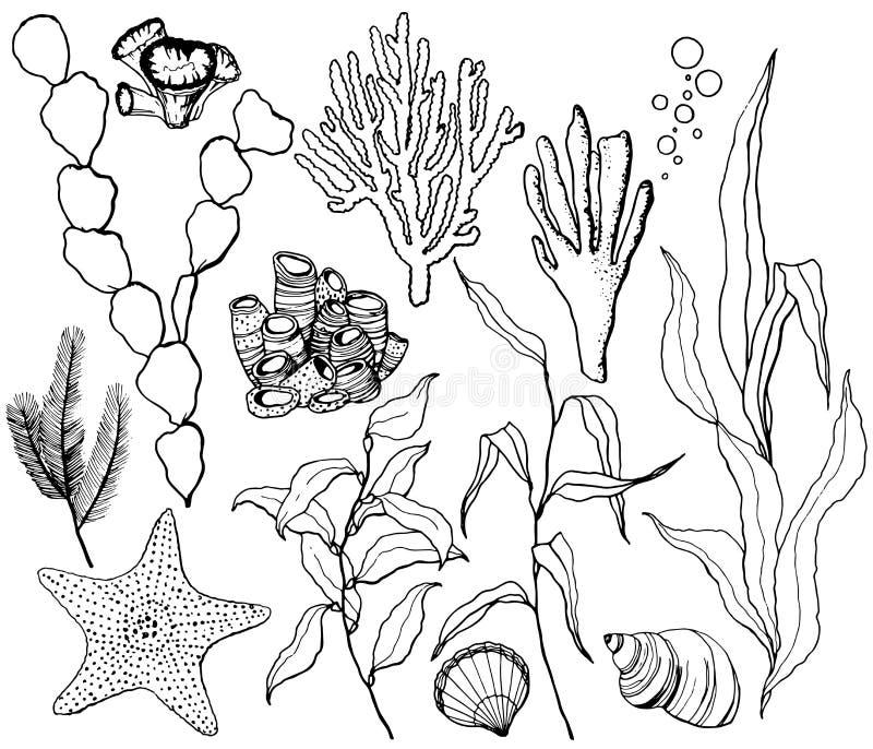 Ensemble d'eau du fond de vecteur de schéma avec des étoiles de mer, des coquilles et des usines de récif coralien Laminaria, cor illustration stock