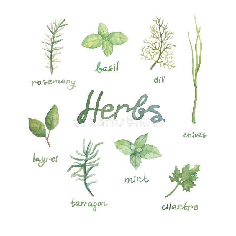 Ensemble d'herbe de nourriture d'épices d'aquarelle illustration stock