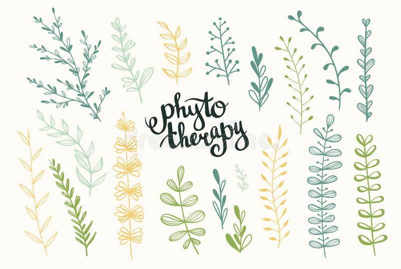 Ensemble d'herbes de vecteur Fond de Phytotherapy illustration stock