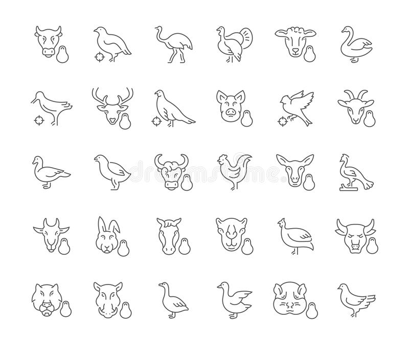 Ensemble d'icônes simples de viande et de volaille illustration libre de droits