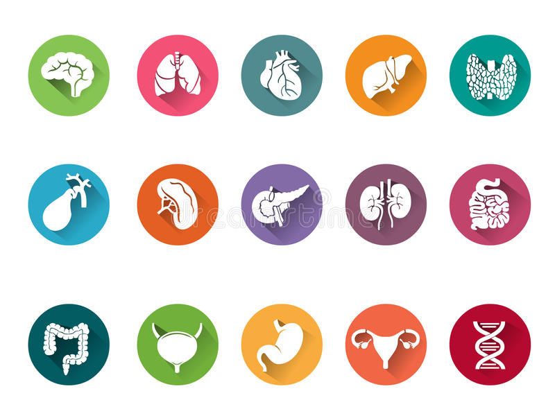 Ensemble d'icône de vecteur d'organes internes humains illustration de vecteur