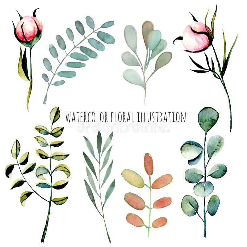 Ensemble d'illustration de bourgeon floraux de pivoine de rose d'aquarelle et de plantes vertes illustration stock