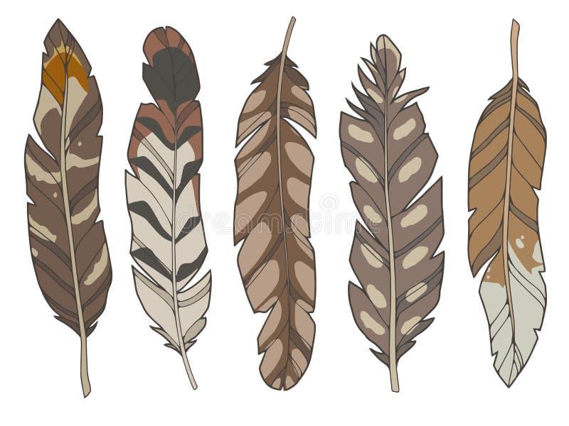 Ensemble d'illustration de style de bande dessinée de différentes plumes d'oiseau brunes naturelles d'aigle, de canard et d'échas illustration de vecteur