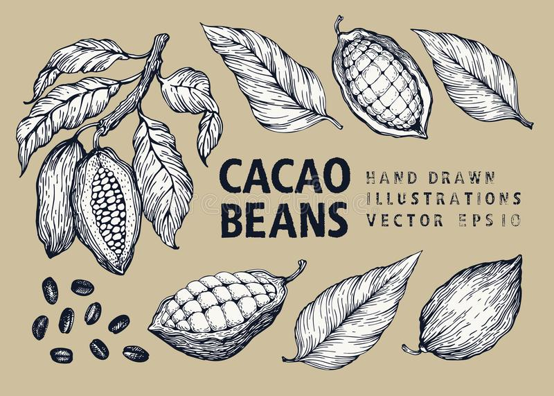 Ensemble d'illustration de vecteur de graines de cacao Illustration gravée de style de vintage Graines de cacao de chocolat illustration de vecteur