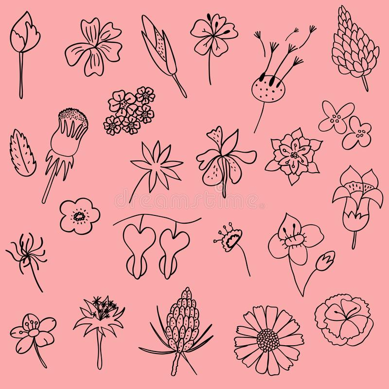 Ensemble d'illustration de vecteur de griffonnage tiré par la main de feuille de fleur comme grap photographie stock libre de droits
