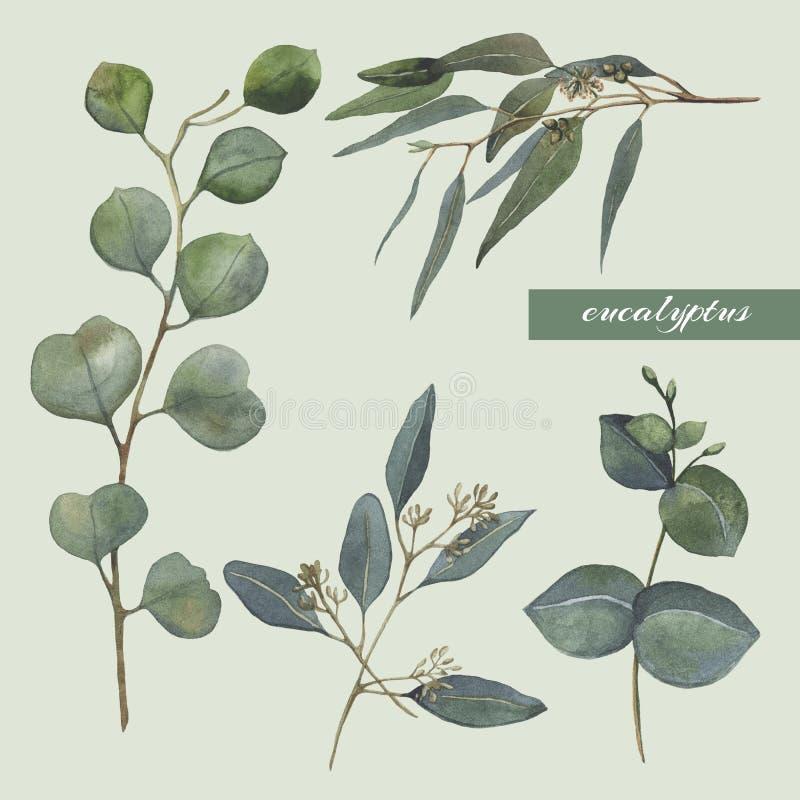 Ensemble d'illustrations de png Brances d'eucalyptus Collection moderne de mariage photographie stock libre de droits