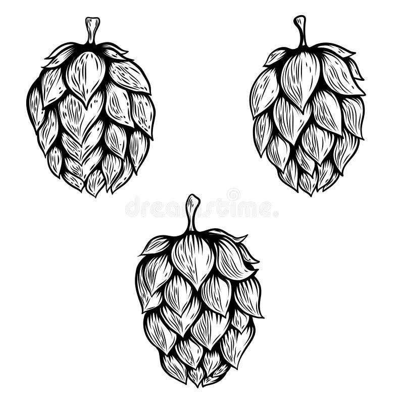 Ensemble d'illustrations tirées par la main d'houblon de bière Concevez l'élément pour le logo, label, emblème, signe illustration de vecteur