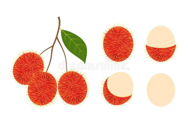 Ensemble d'isolement par fruit frais de ramboutan sur le fond blanc illustration de vecteur