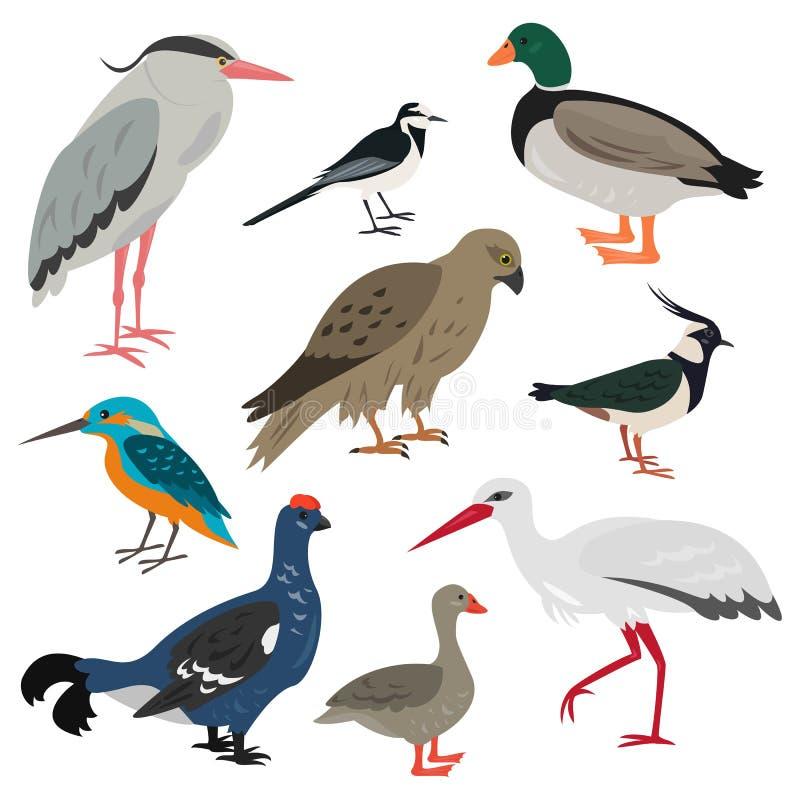 Ensemble d'oiseaux mignons de bande dessinée sur le fond blanc illustration libre de droits