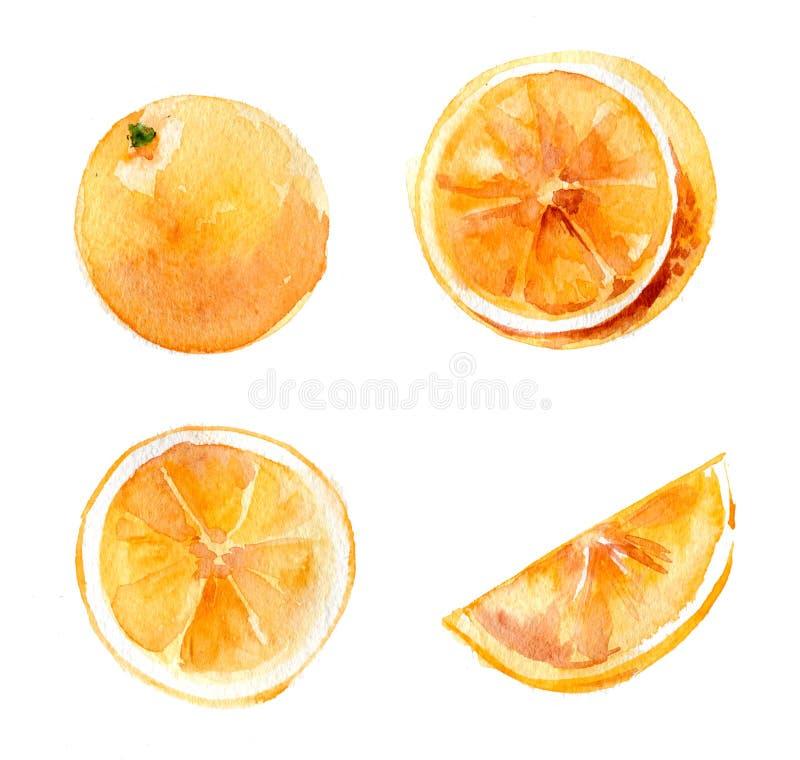 Ensemble d'oranges entières et coupées sur un fond blanc Illustration, aquarelle tirée par la main D'isolement illustration libre de droits