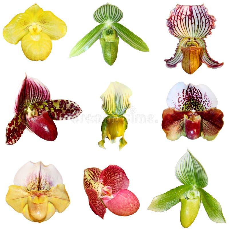 Ensemble d'orchidées photographie stock