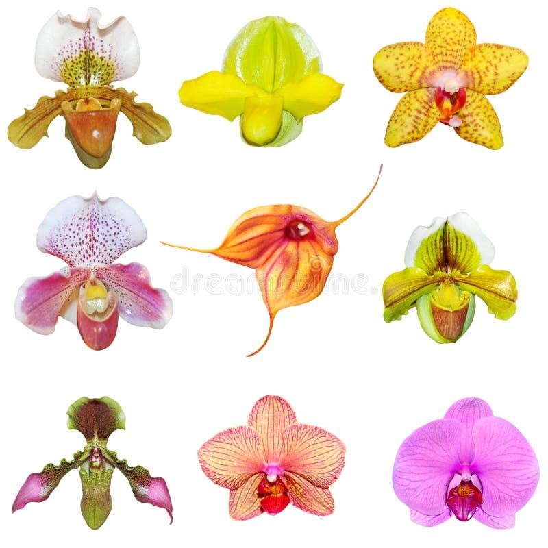 Ensemble d'orchidées photo libre de droits