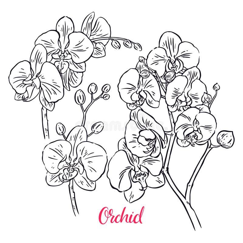 Ensemble d'orchidées de croquis illustration stock