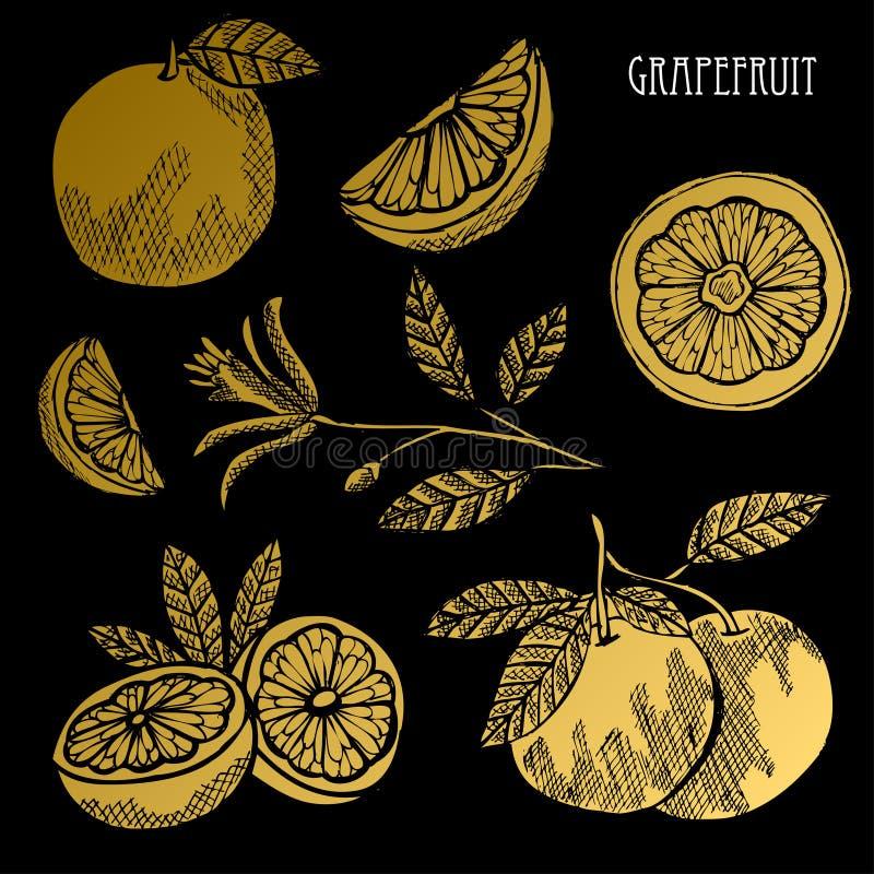 Ensemble d'or tiré par la main de fruits illustration libre de droits