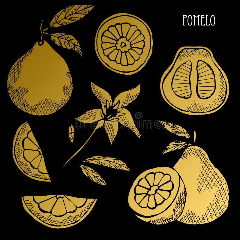 Ensemble d'or tiré par la main de fruits illustration de vecteur