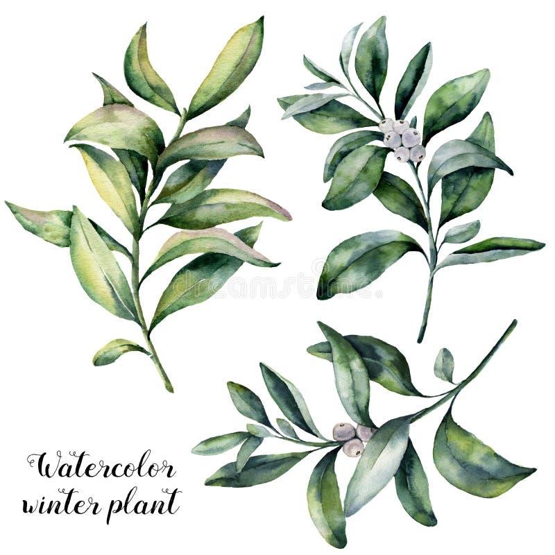 Ensemble d'usine d'hiver d'aquarelle Branche peinte à la main de snowberry avec la baie blanche d'isolement sur le fond blanc Noë illustration libre de droits