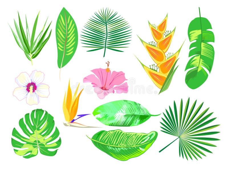 Ensemble d'usines exotiques tropicales Fleurs et palmettes roses Vecteur illustration stock
