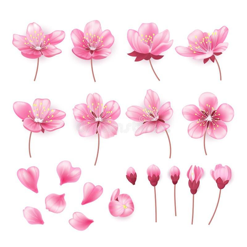 Ensemble de belles fleurs de cerisier d'isolement sur le fond transparent Collection de fleur rose de Sakura ou de pomme illustration de vecteur