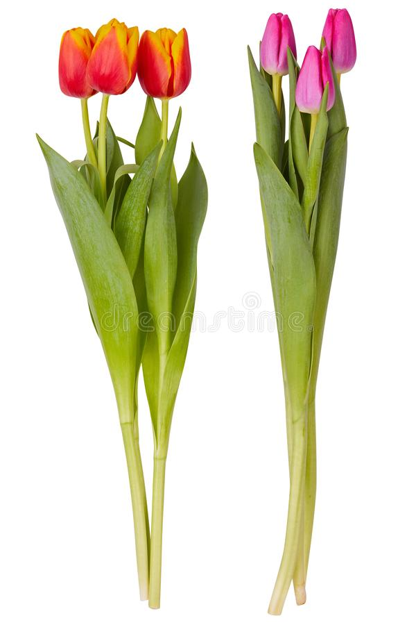 Ensemble de bouquets rouges et roses de fleurs de tulipe d'isolement sur le blanc image libre de droits