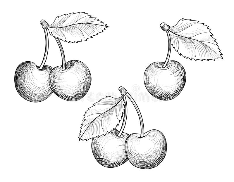 Ensemble de branche de cerise Baie tirée par la main Croquis de fruit de Fesh illustration stock