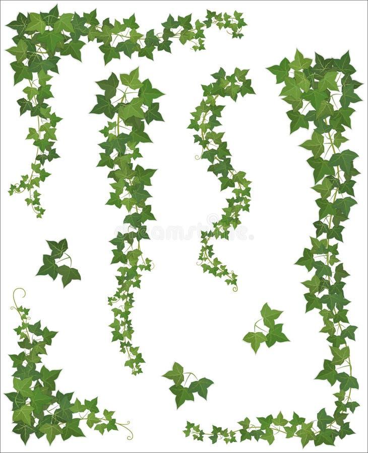 Ensemble de branches accrochantes de lierre sur un fond blanc illustration libre de droits
