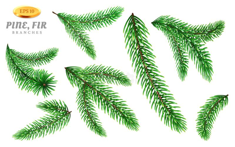 Ensemble de branches d'arbre d'isolement de pin ou de sapin illustration de vecteur