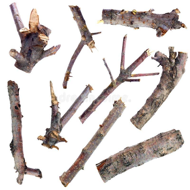 Ensemble de branches d'arbre sèches d'isolement sur un fond blanc photos stock