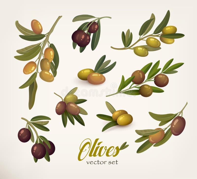 Ensemble de branches d'olivier vertes et noires avec la brindille illustration libre de droits