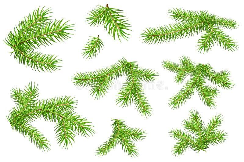 Ensemble de branches pelucheuses vertes de pin de sapin d'isolement sur le fond blanc illustration libre de droits
