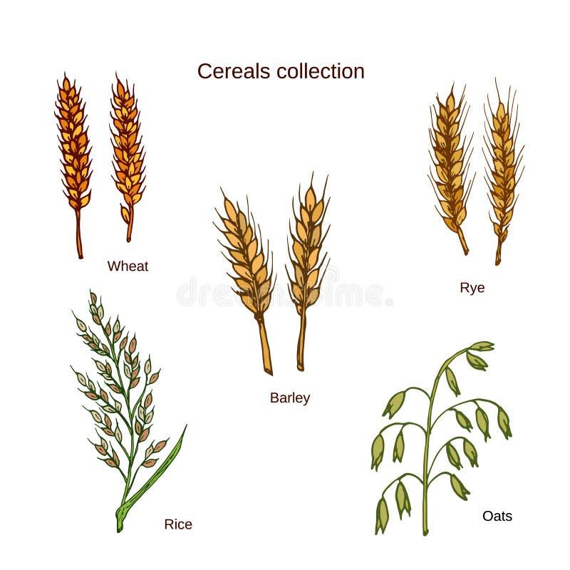 Ensemble de céréales Orge, seigle, avoine, riz et blé illustration libre de droits