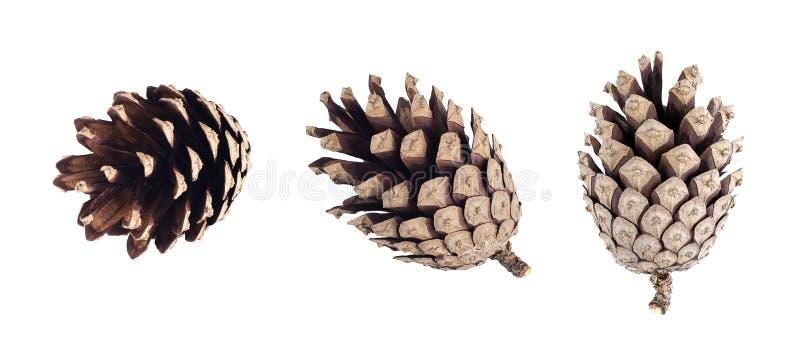 Ensemble de cône de pin d'isolement sur le fond blanc photos stock