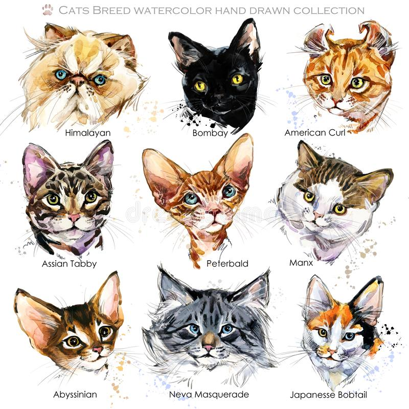 Ensemble de Cat Breeds Affiche mignonne d'animaux familiers Collection du visage du chat illustration stock