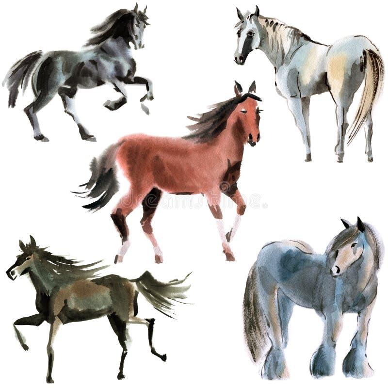 Ensemble de chevaux Illustration d'aquarelle à l'arrière-plan blanc illustration de vecteur