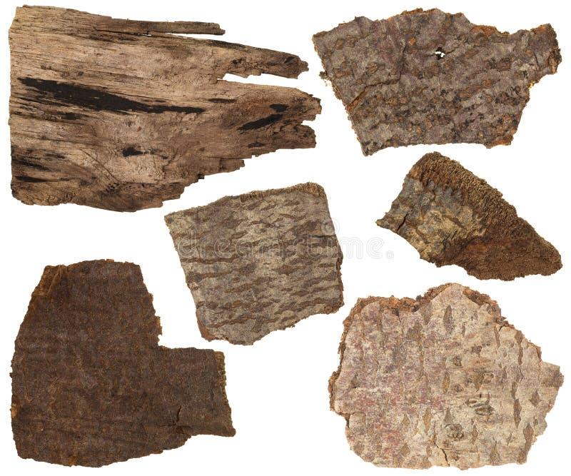 Ensemble de collage d'écorce sèche et parties de tronc de pin d'isolement image stock