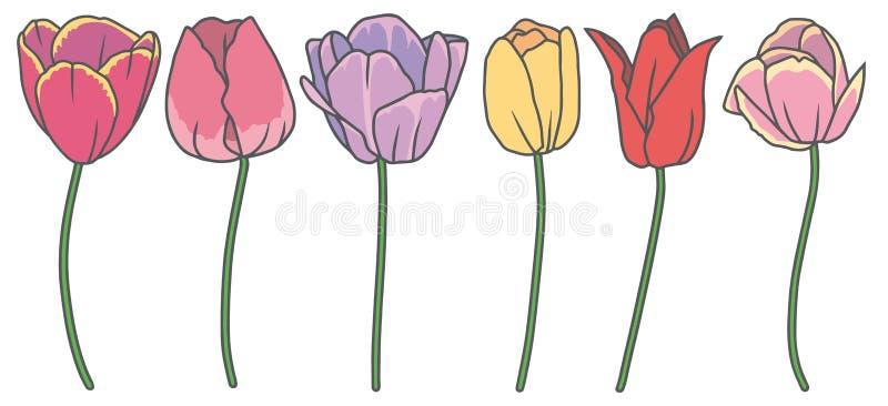 Ensemble de collection de vecteur avec 6 belles fleurs tirées de ressort de tulipe de bande dessinée dans différentes couleurs illustration libre de droits