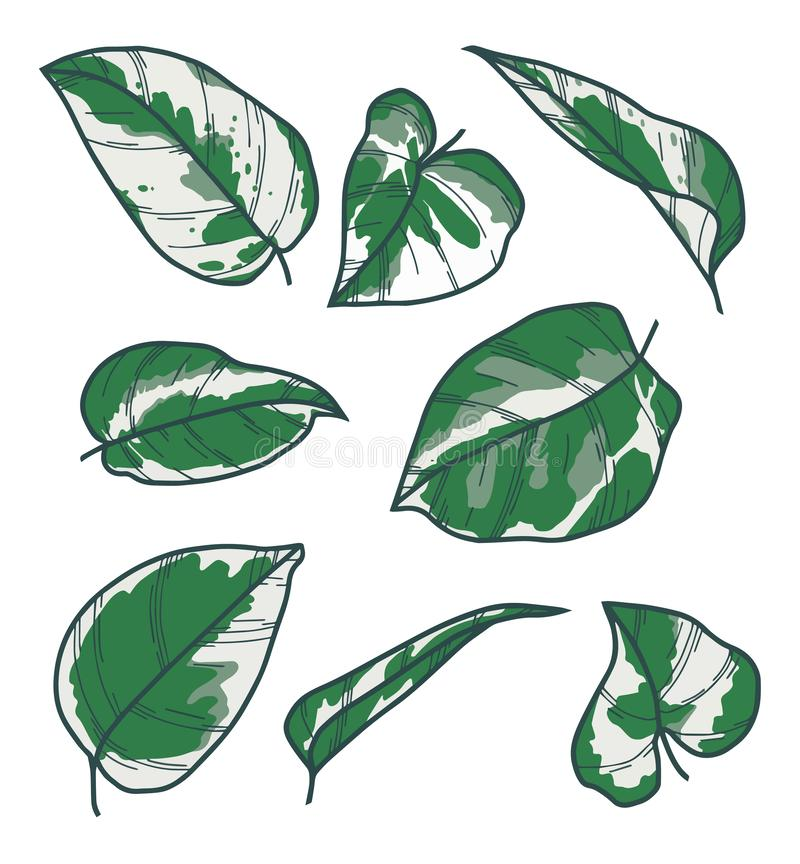 "Ensemble de collection de vecteur dessins de feuille de N Joy Plant d'Epipremnum de Pothos exotique de Pinnatum "" illustration de vecteur"