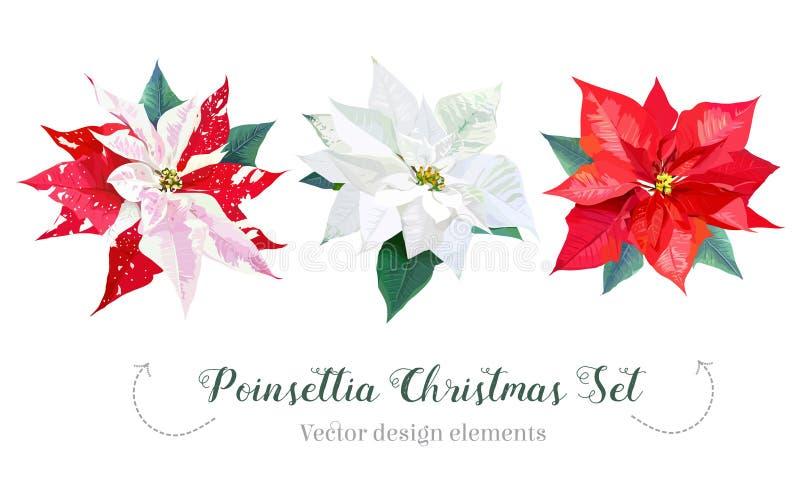 Ensemble de conception de vecteur de sélection de poinsettia de Noël illustration libre de droits