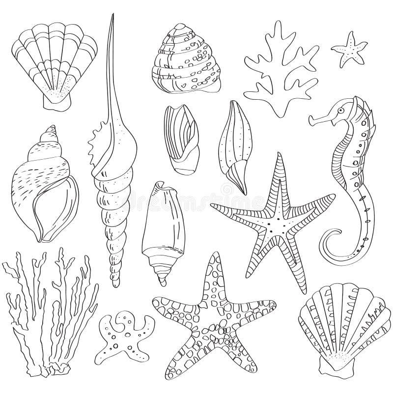 Ensemble de coquilles de mer, tiré par la main illustration libre de droits