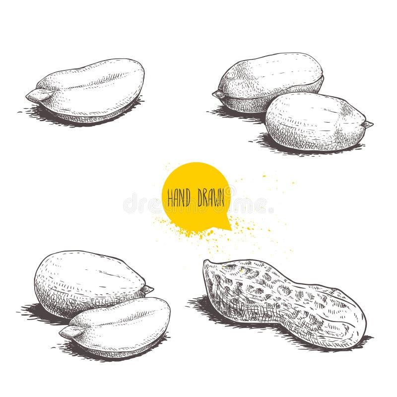 Ensemble de croquis d'arachides R?tros illustrations tir?es par la main de vecteur de style d'aliment biologique Graines et coqui illustration libre de droits
