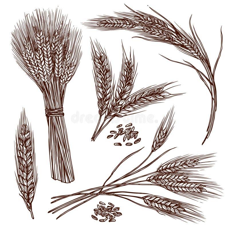 Ensemble de croquis de blé illustration libre de droits