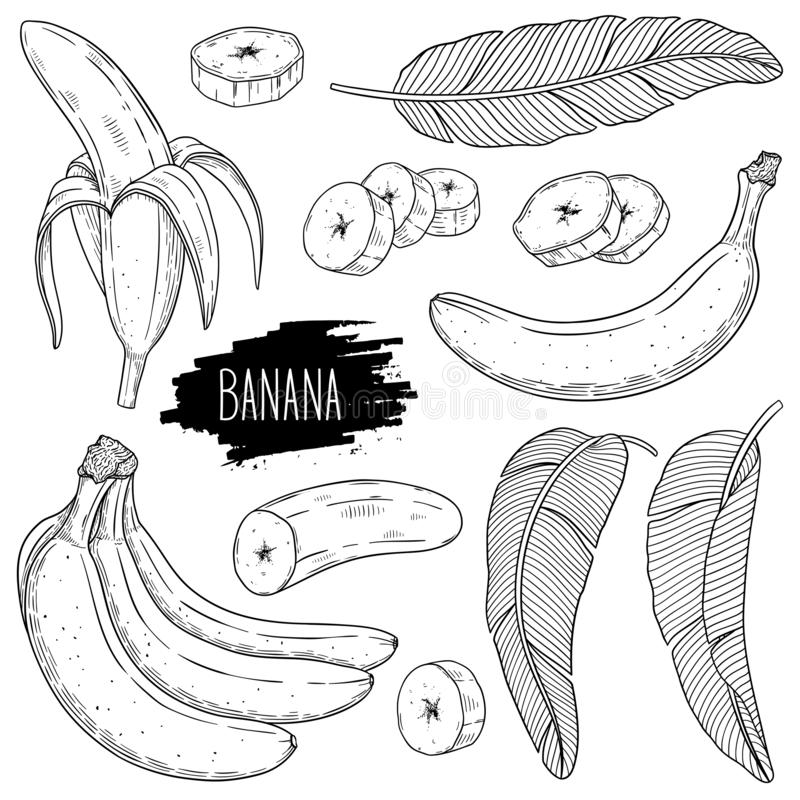 Ensemble de croquis de style d'encre d'ensemble de banane images stock