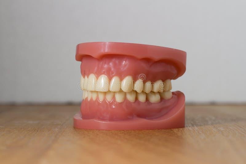 Ensemble de dents fausses artificielles image stock