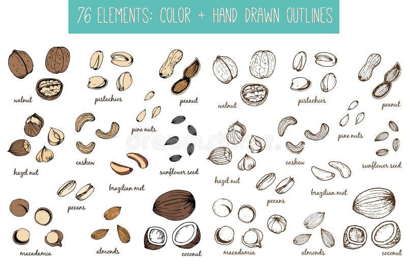 Ensemble de dessins d'écrous et de graines croquis main-dessin illustration libre de droits