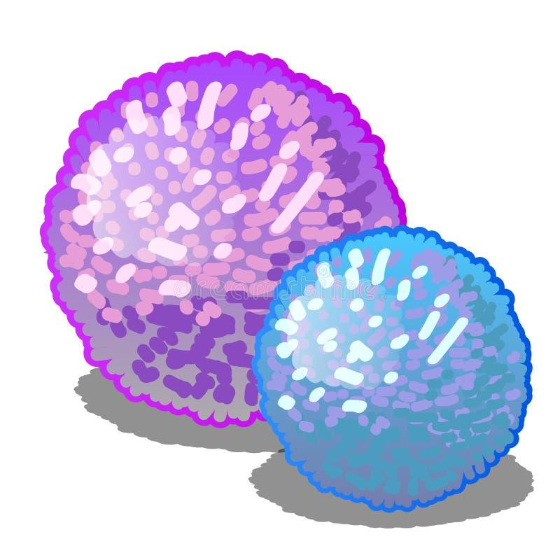 Ensemble de deux pompons rougeoyants de bande dessinée roses et de couleurs bleues d'isolement sur un fond blanc Illustration de  illustration de vecteur