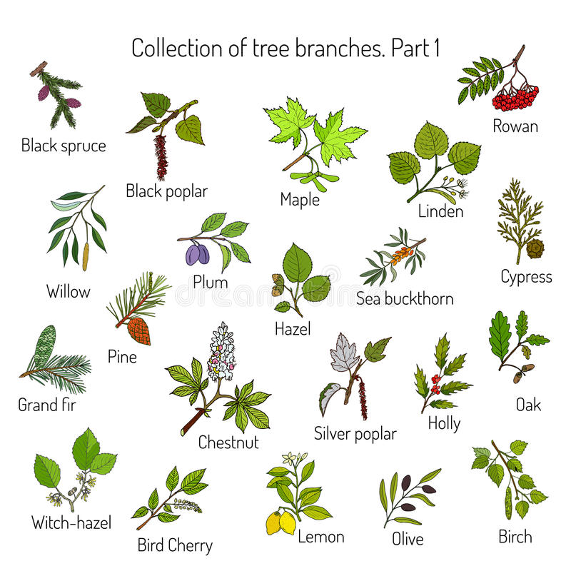 Ensemble de différentes branches d'arbre illustration de vecteur