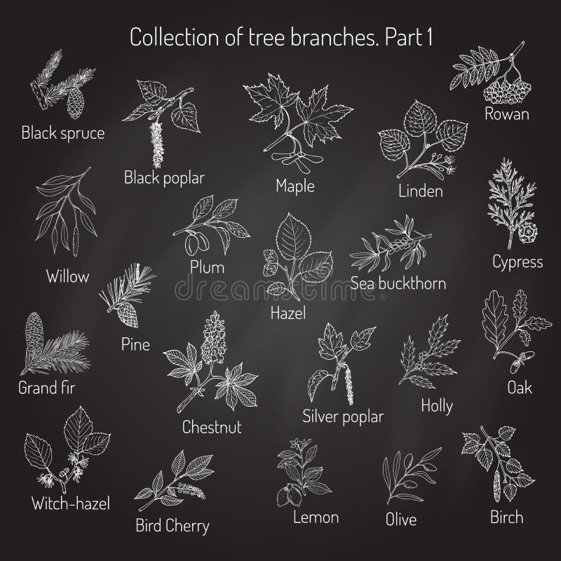 Ensemble de différentes branches d'arbre illustration libre de droits